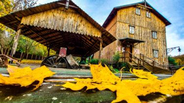 Drewniany młyn, a obok niego niższe drewniane zadaszenie. Na pierwszym planie zółte liście klonu leżące na ziemi.